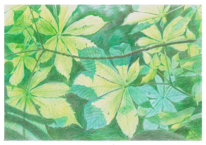 Barevná kresba podle fotografie – Listy; Autor fotografie: Irena Bártíková/ A3