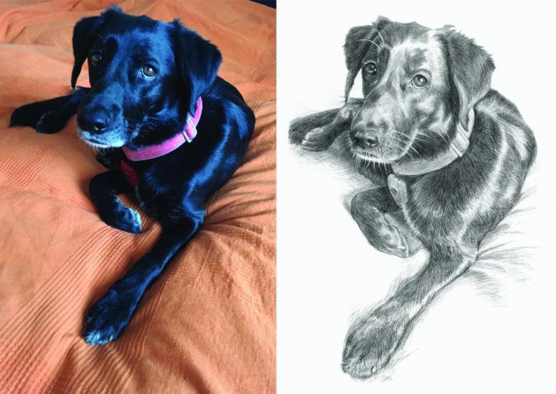 Černobílá kresba podle fotografie – Pes 1/ A3