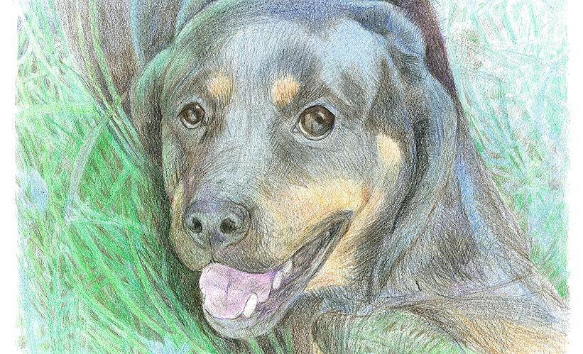 obrázek podle fotografie psa 2